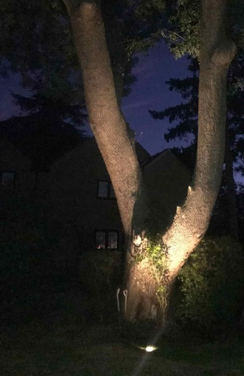 Floodlit tree in a garden setting